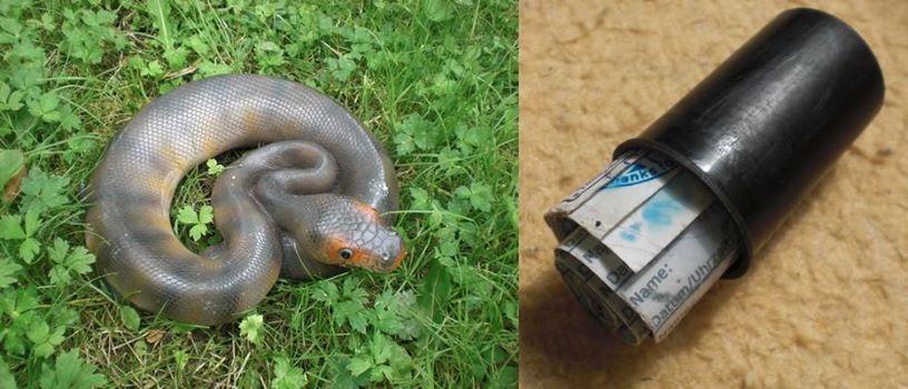 Die Python im Weißenborner Wald